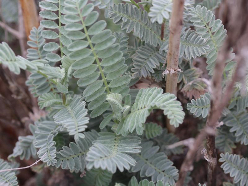 Inventory of Rare Plants