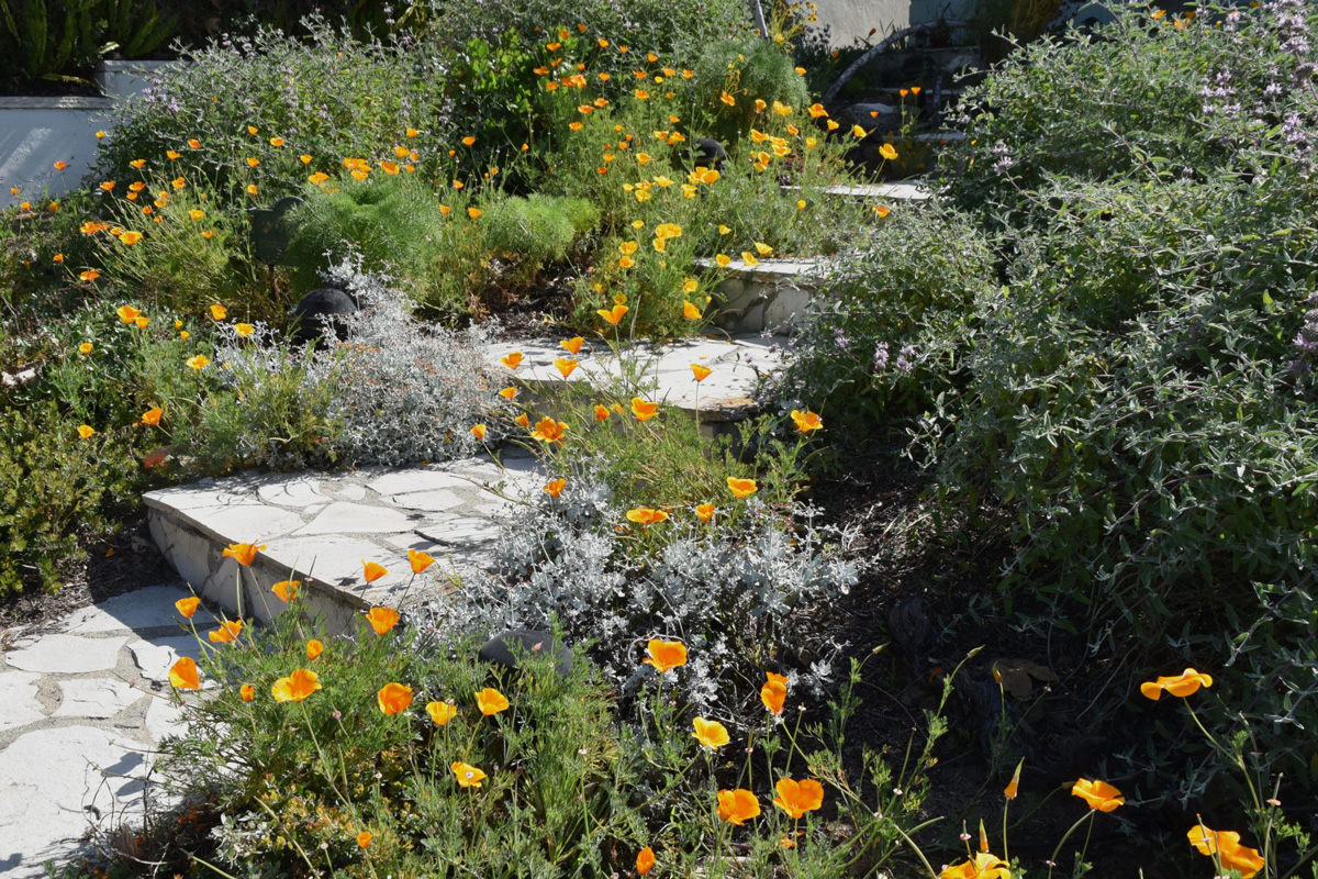 Spring blooms along walkway. Photo: Ann Dalkey