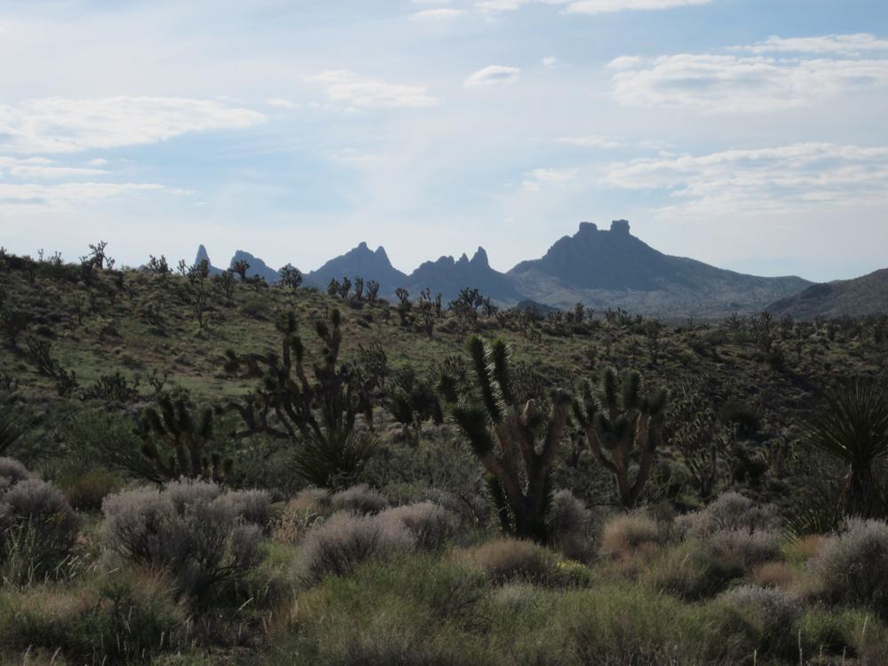 Castle Mountain Peaks. Photo by Duncan Bell.