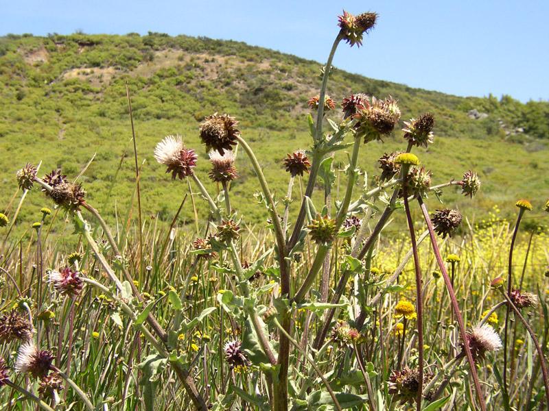 Rare plant status review