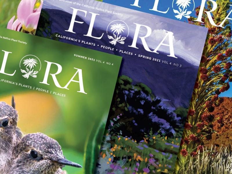 Flora magazine covers