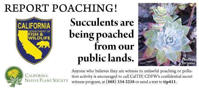 Dudleya Poaching