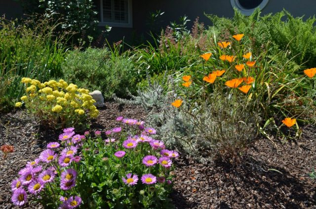 Gardening California Native Plant Society
