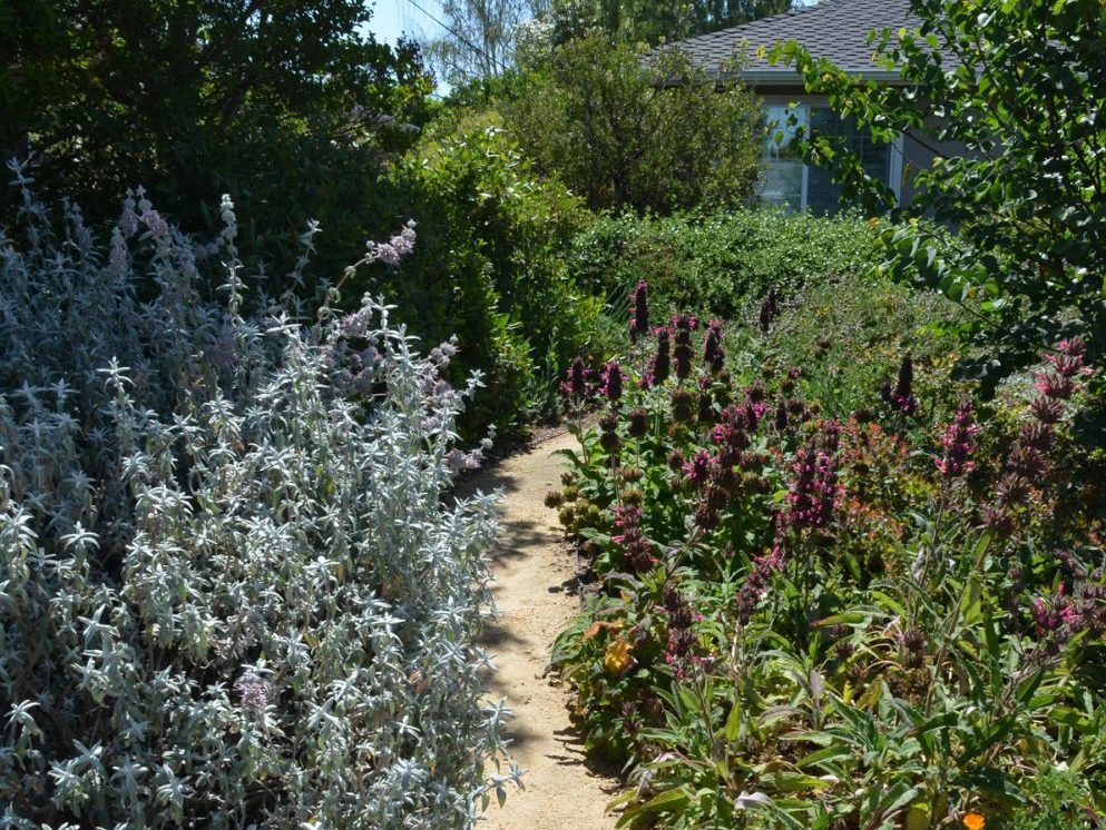 Joel\'s Fremont Garden - California Native Plant Society
