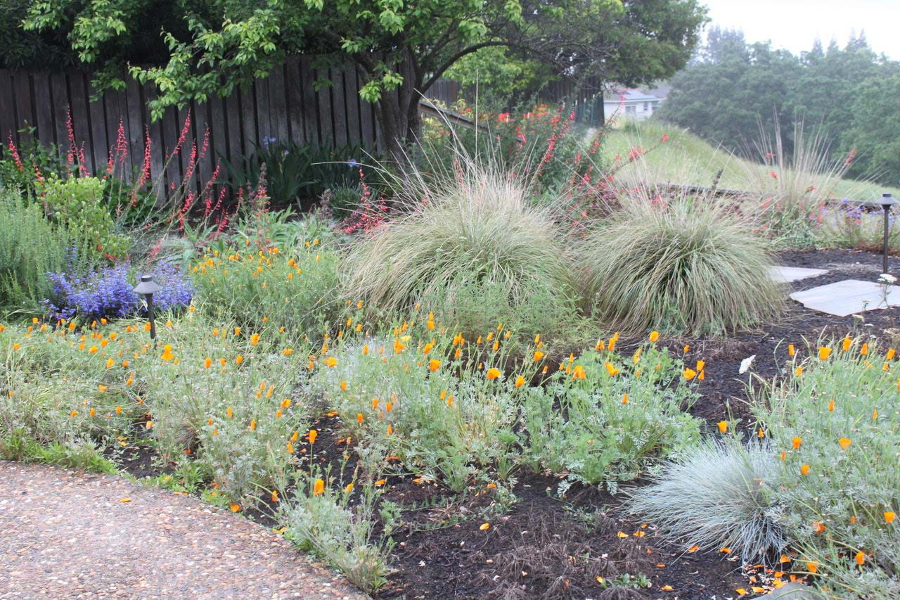 Courtesy of Kathy Kramer, Bringing Back the Natives Garden Tour