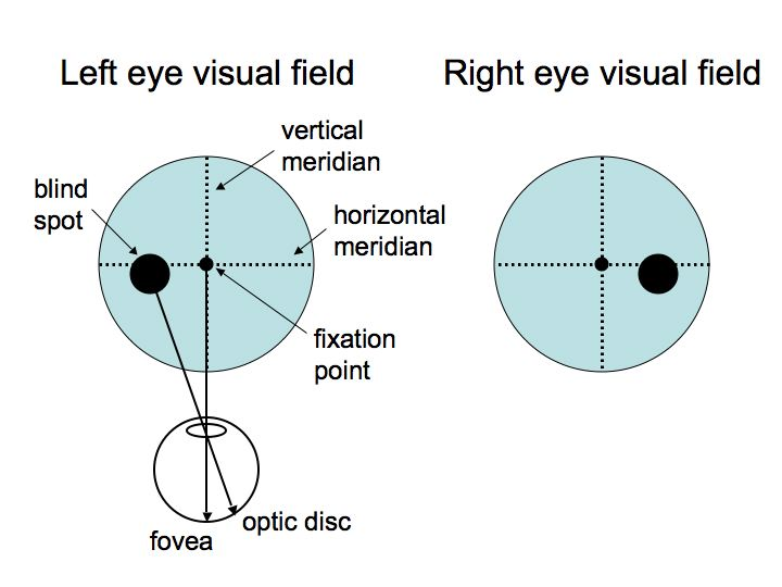 diagram of the left eye sip call flow perception lecture notes lgn and v1 visual fields