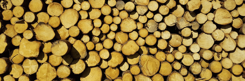 Harvested timber