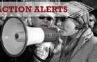 Action Alerts – Week of Nov 12th