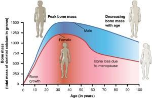 Healing Fractured Bones