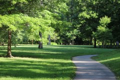 Lush green woods. A walk in the park. Like your career.