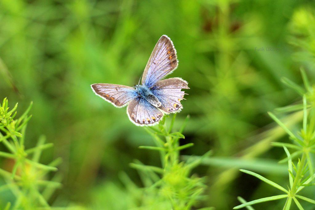 Afbeelding van blauwgrijze vlinder gevonden op coachingmetsanne.com voor artikel over meditatie, meditatie tips., leren mediteren