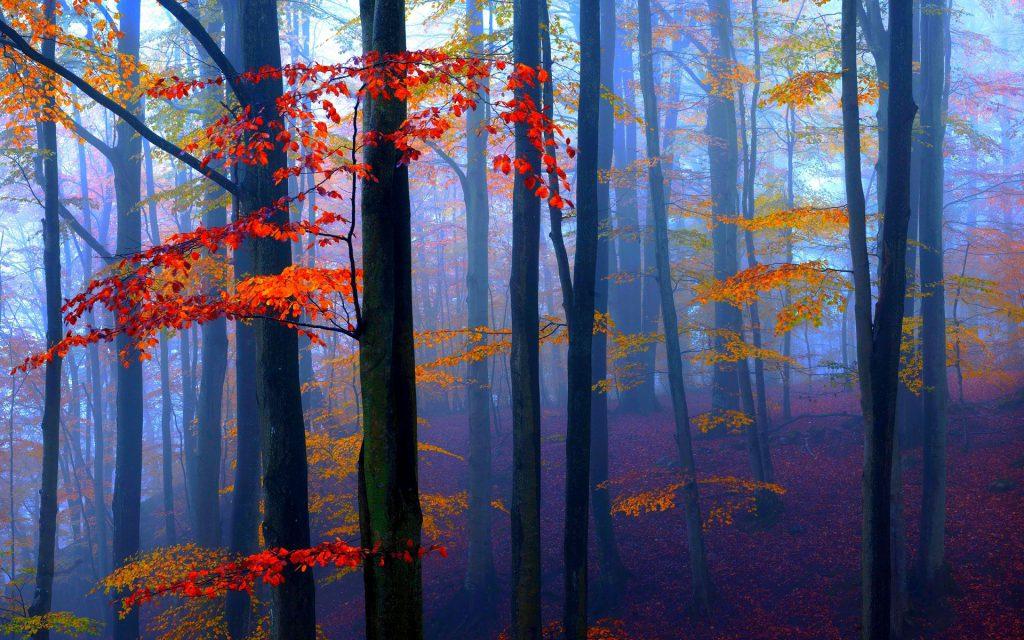 Rust in je hoofd, afbeelding bomen in bos, gevonden op coachingmetsanne.com life coaching Den Haag, coaching