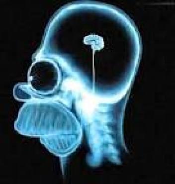 Cervello che fa ridere