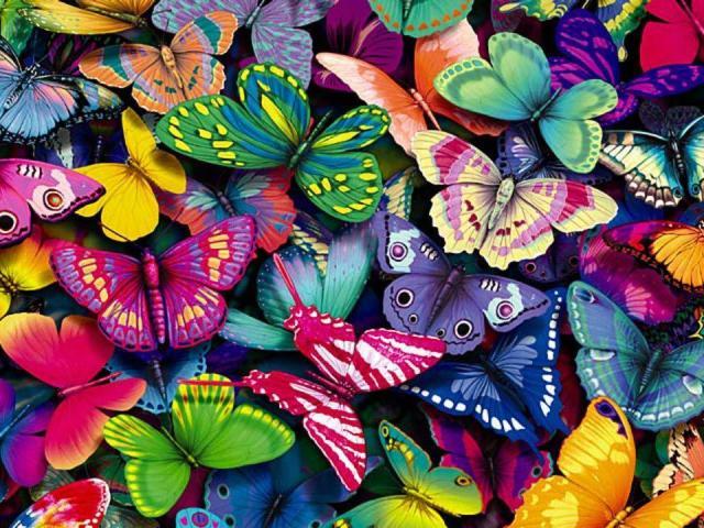 farfalle colorate