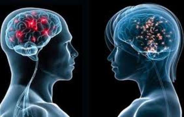 cervelli maschile e femminile