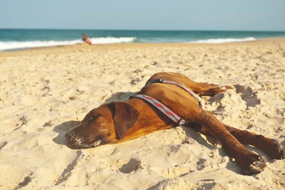 Luisteren op het strand