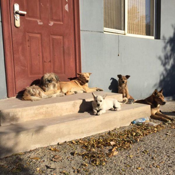 straathonden in het zonnetje