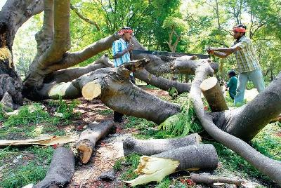 Image result for forest cutting in India