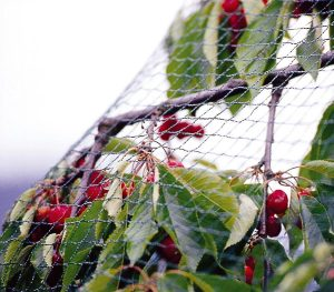 crop protection net