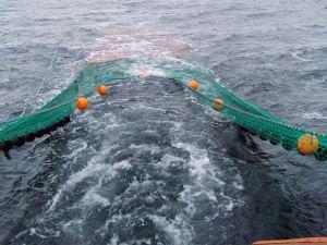 prawn trawl net