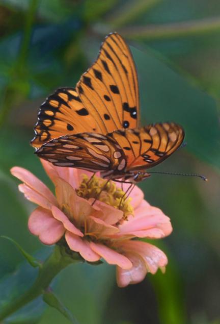 Brookgreen Gardens in TripAdvisors Top Ten