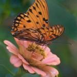 ButterflyonfloweratBrookgreennewbutterflyhouse