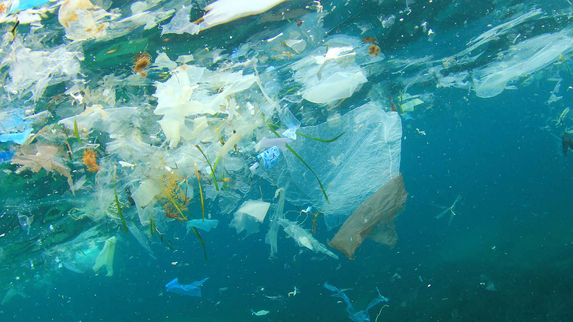 Image result for plastic in our oceans