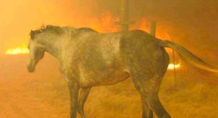 Are YOU Prepared for a Raging WildFire? ~ Ranches Practice Large Animal Evacuation