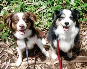 New San Mateo County Dog Fines