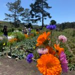 Half Moon Bay/Coastside Chamber of Commerce's Farm, Fish, Flowers Tour