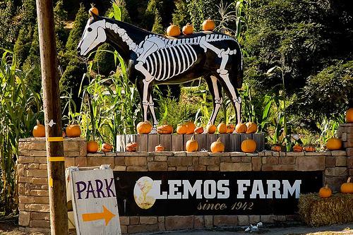 lemos farm painted horse