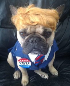 french bulldog trump