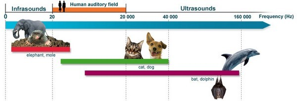 Diagram showing hearing ranges of differnt animals. Humans are in orange, between 20Hz-20kHz. Elephants and moles (red) have a far lower range, while cats and dogs (green) have a wider hearing range (upto 40 kHz) than humans. Bats and dolphins are champions sound detectors, able to hear up to 160 kHz. Image Credit : Unknown. Image Source : Cochlea-dot-org.