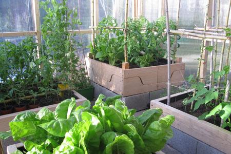 Invernadero para verduras y hortalizas