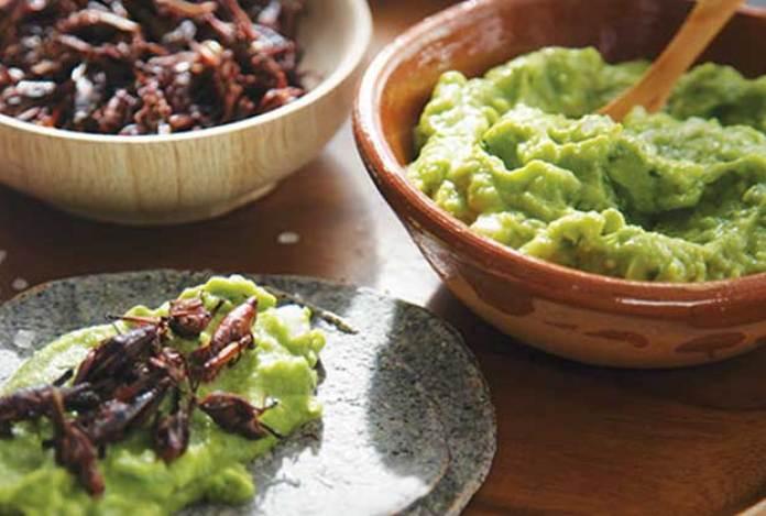 Guacamole con chapulines   Cocina Vital