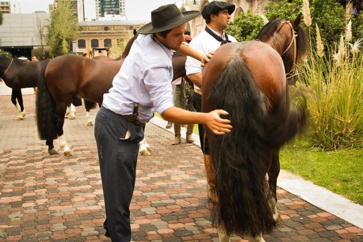 EXPOSICION-NUESTROS-CABALLOS-LA-RURAL-2016-13