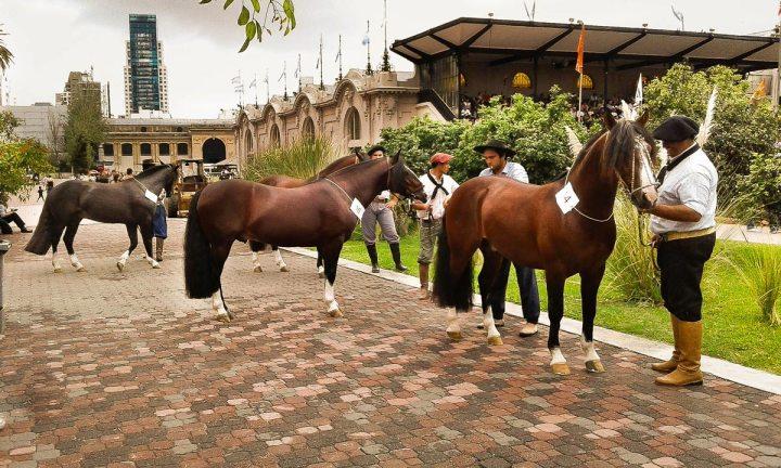 EXPOSICION-NUESTROS-CABALLOS-LA-RURAL-2016-14