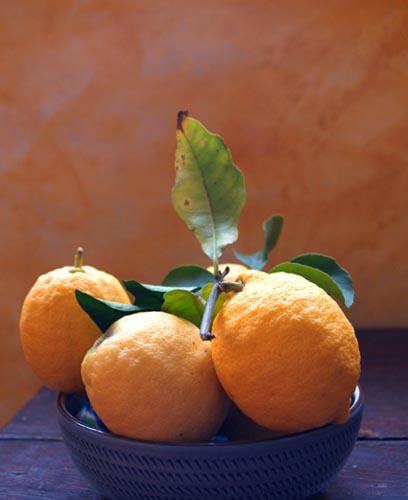 Citrons de Sicile©cocineraloca.fr