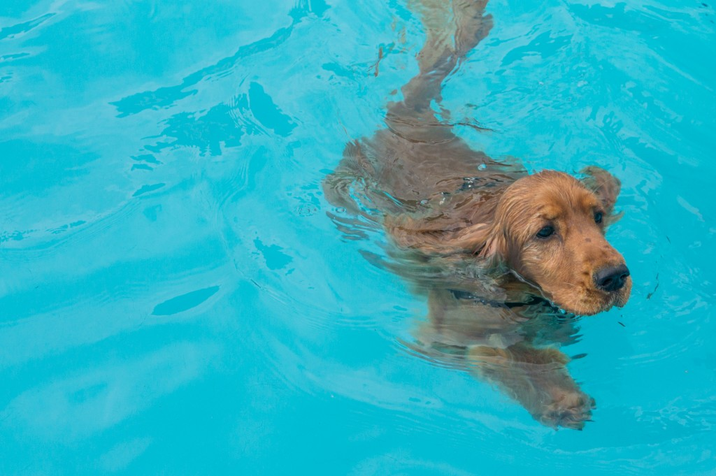 Hondenplons in Leimuiden