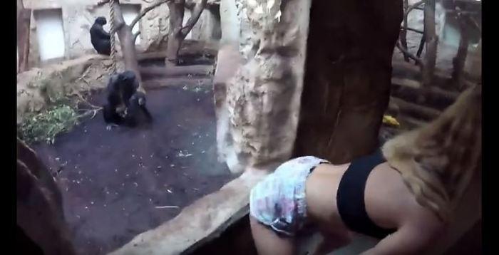 辣妹大秀「超強美尻」想看會怎樣!結果黑猩猩超男人…眾人直接爆笑