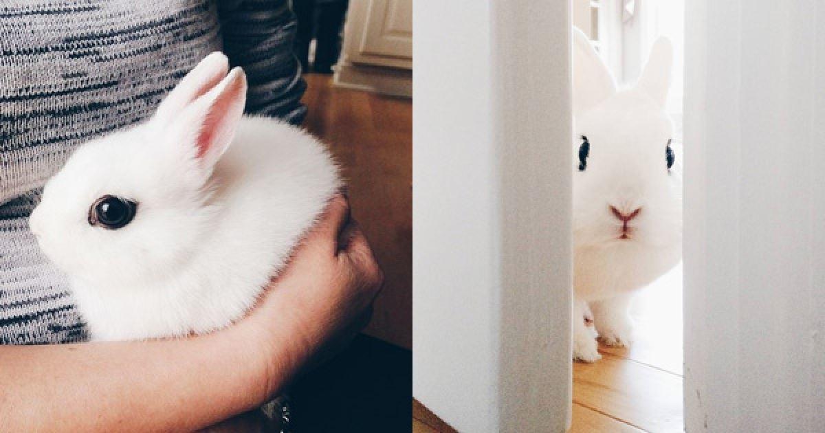 360度零死角的超夢幻「女神兔兔」怎麼看都萌殺,尤其烏溜溜的大眼睛更是電力爆表! - JUSTYOU