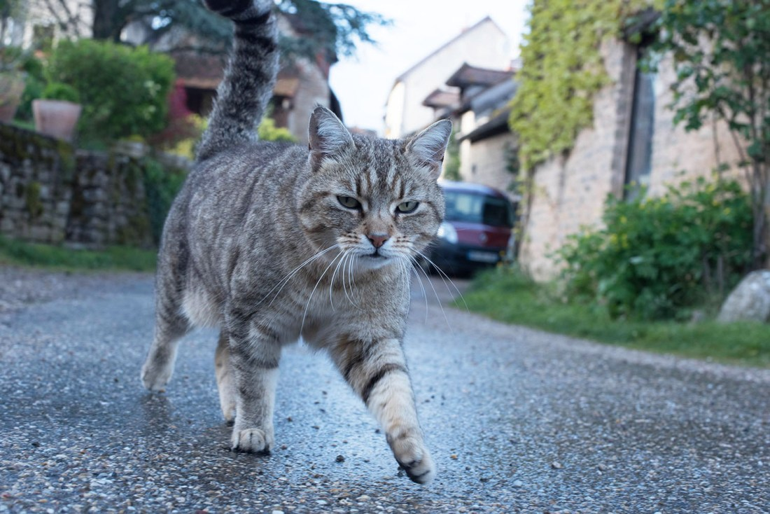 A cat walks on the streets of Chateauneuf-en-Auxois in Burgundy, as captured by travel blogger Cee Fardoe of Coco & Vera