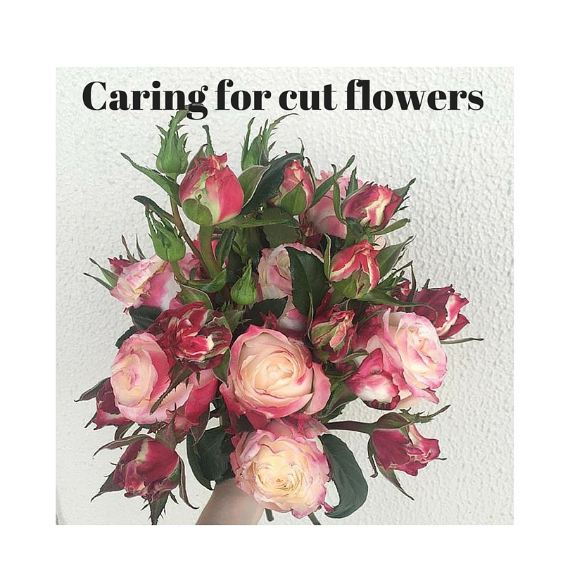 advice and tips on how to care for cut flowers