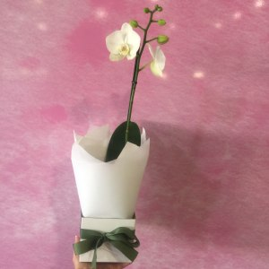 Boxed Orchid - White
