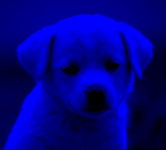 bluefilter.jpg