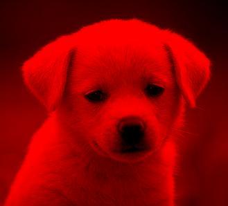 redfilter.jpg