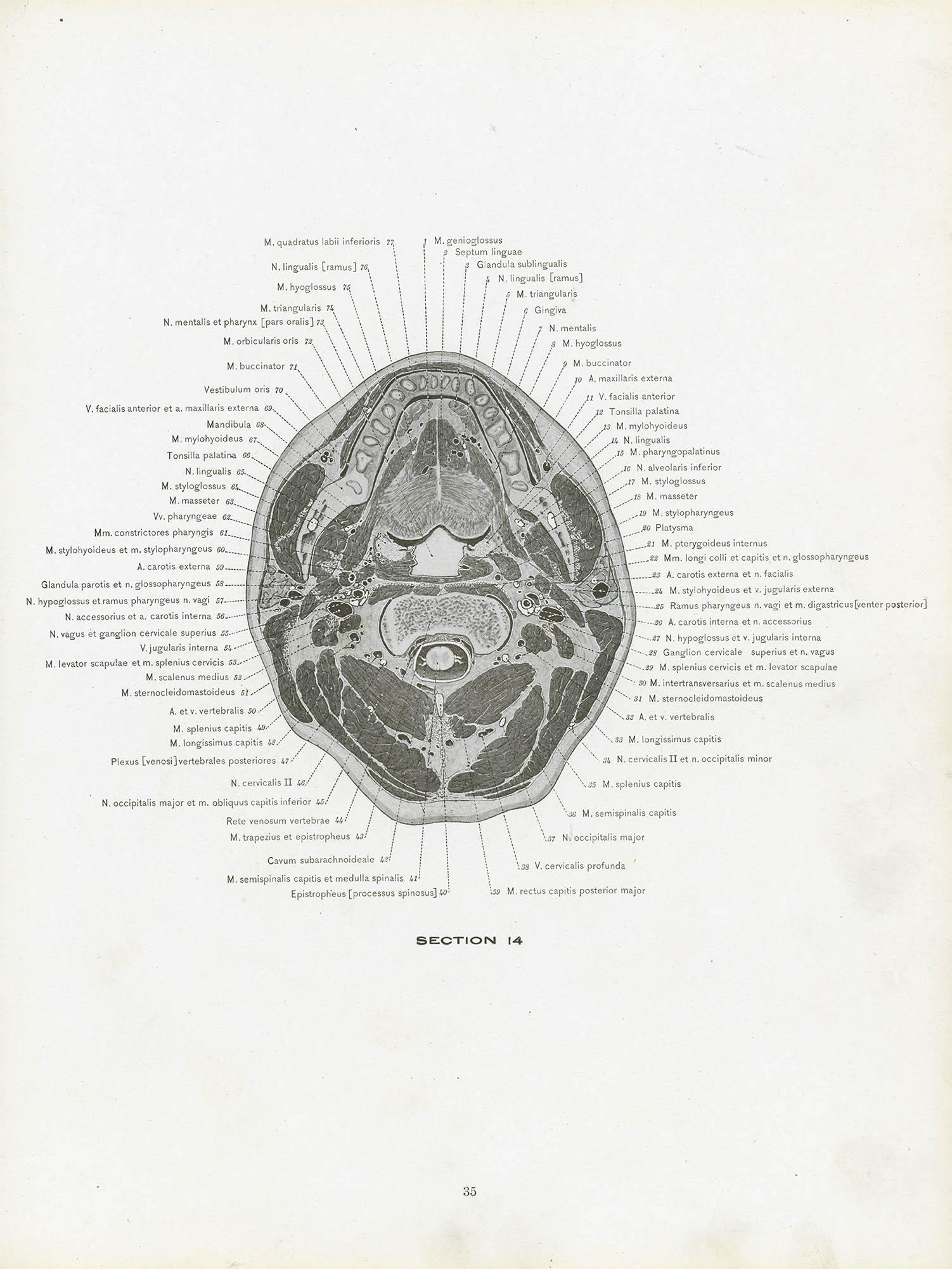A Cross Section Anatomy