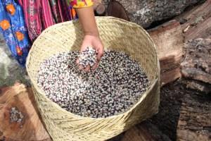 Enfrentarán comunidades indígenas el invierno sin cosecha de maíz (5)