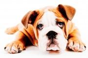 dog_thinking
