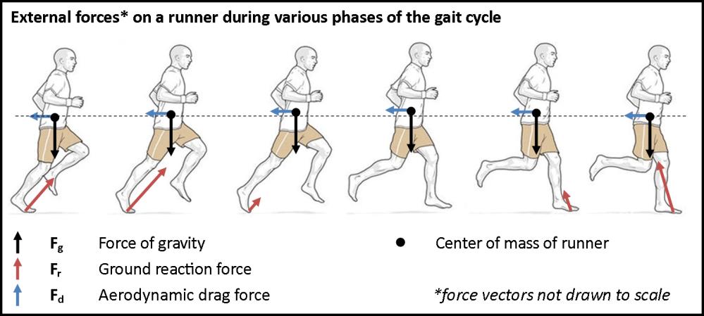 medium resolution of gait cycle free body diagram